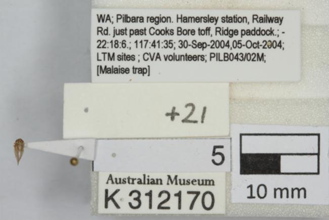 https://images.ala.org.au/image/proxyImageThumbnailLarge?imageId=64407244-42d5-4d31-a272-71c9c5e02111
