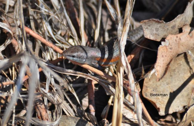 sighting photo thumbnail