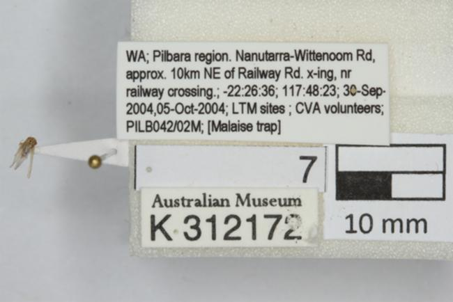 https://images.ala.org.au/image/proxyImageThumbnailLarge?imageId=8c93fa86-e4d4-423a-abe8-a32b52a82d15