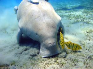 Dugongidae | Animal Database | FANDOM powered by Wikia