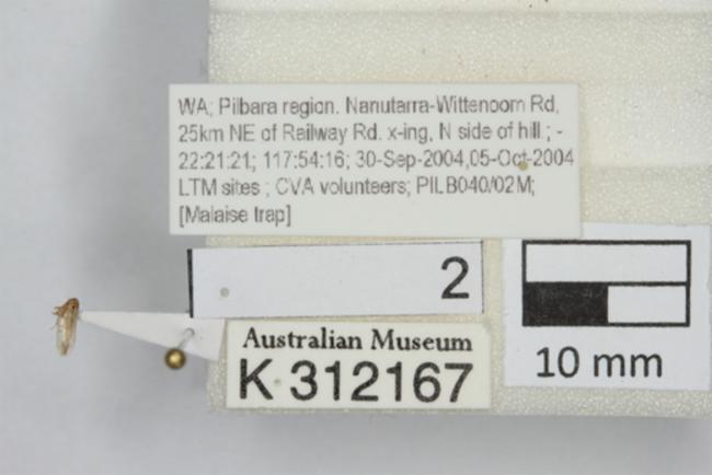 https://images.ala.org.au/image/proxyImageThumbnailLarge?imageId=da58f950-a357-4b7d-bd33-c699cae61b2d